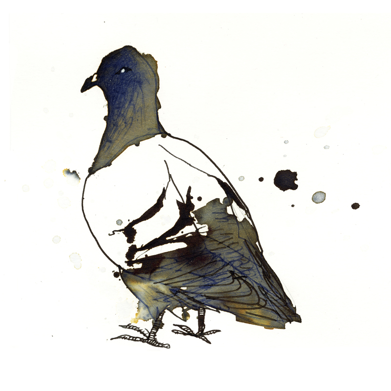 InkAnimals - Pigeon