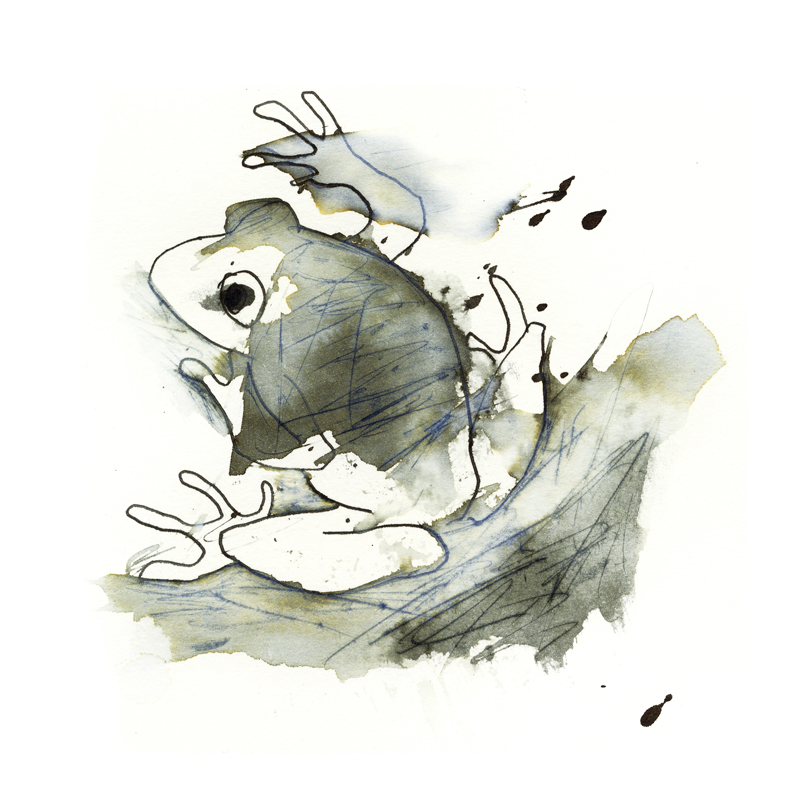 InkAnimals - Frog