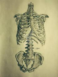 Axial Skeleton. by eCabas
