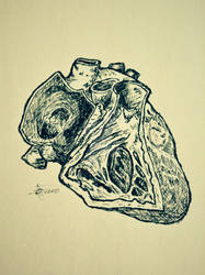 Right Heart. by eCabas