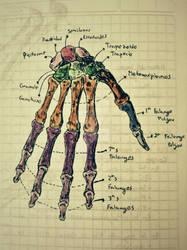 Hand Bones. by eCabas