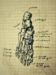 Foot Bones. by eCabas