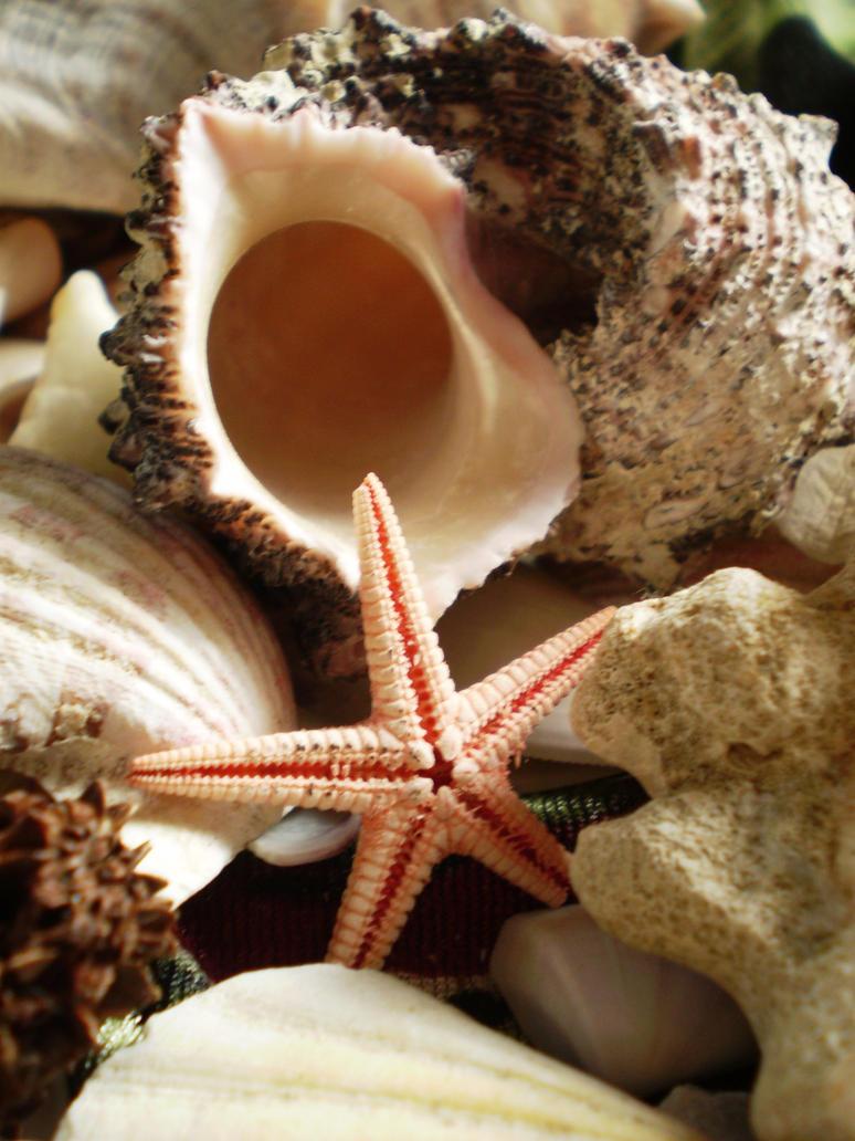 Fish Starfish wallpaper