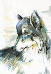Wolf by kangel
