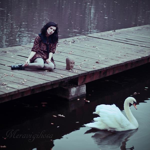 Swan song by Meravigiliosa