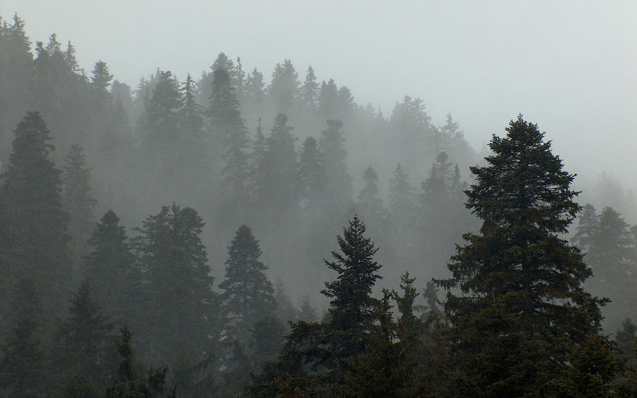 Evergreen Forest Background By StoicLewy