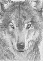 Portrait of a wolf by neylica