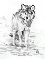Wolf by Rockerz66