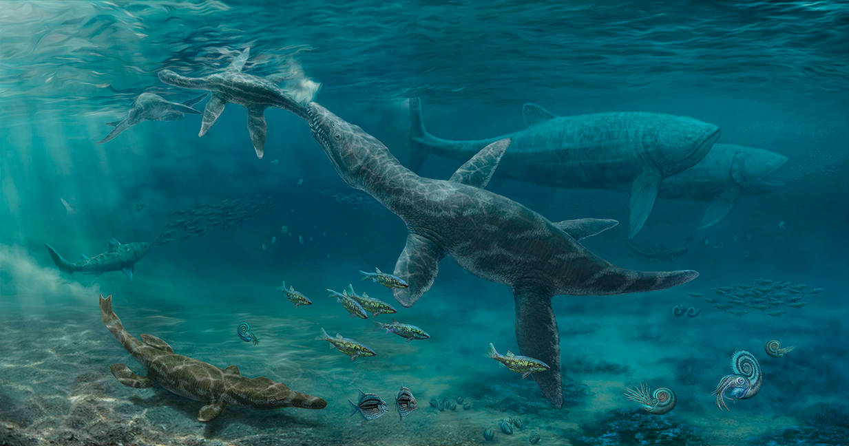 Middle Jurassic marine fauna of Northern France by NGZver