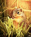 Squirrel dinner