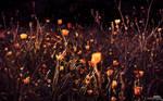 Crepuscule Champetre