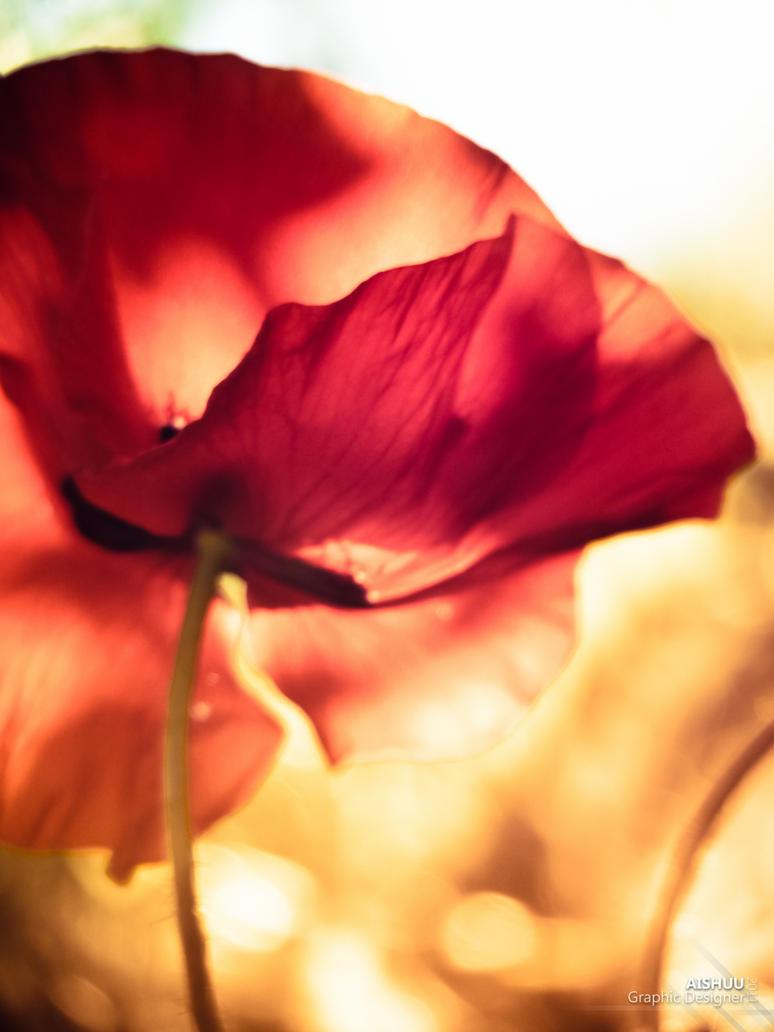Golden Poppy by Ai-Shuu