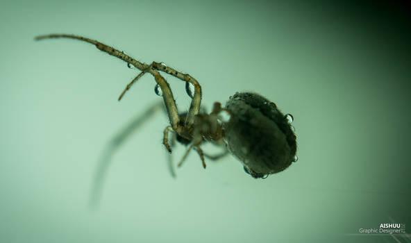 :: Arachnophobia ::