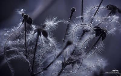 :: Winter Squid :: by Ai-Shuu
