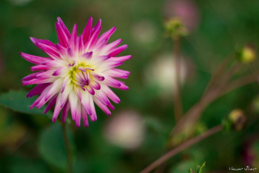Fleur by LatchDrom