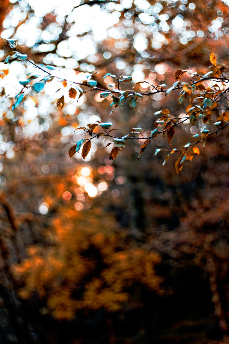 Autumn Leaves by LatchDrom