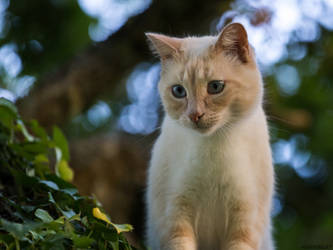 The cat in the tree by LatchDrom