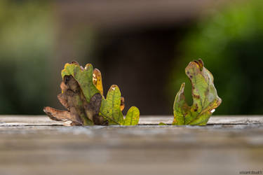 Leaves by LatchDrom