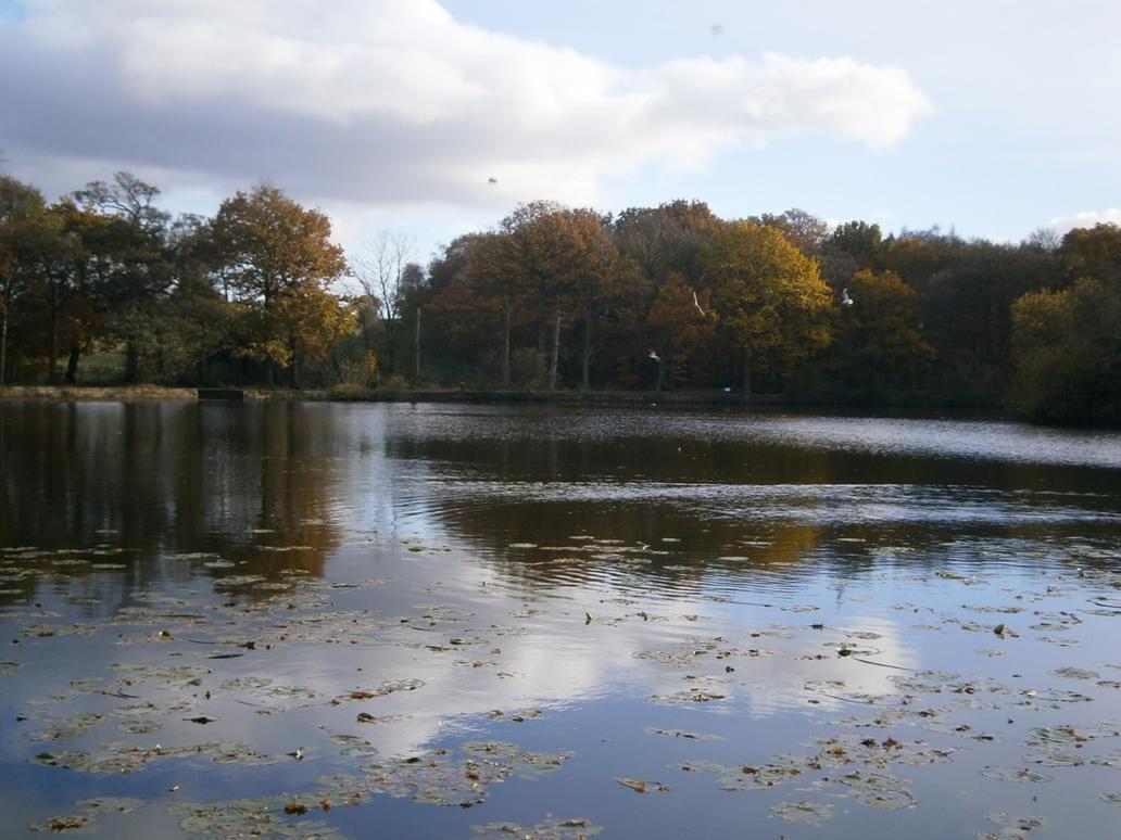 Large Pond Overlook By Incursu On Deviantart