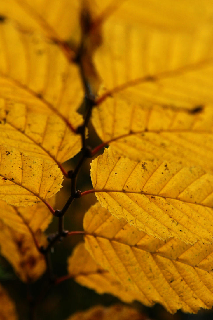 Autumn Ladder by RivalCz
