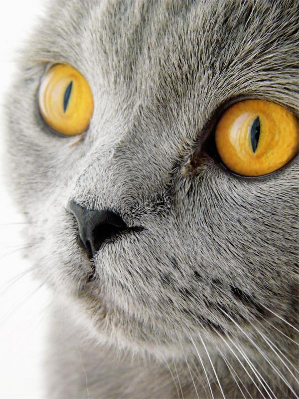 Meow by YUYUrawwr