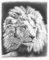 Lion pencil drawing 2