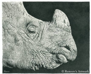 Rhino Pencil Drawing