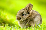 This is not a rabbit.... by light-recycled