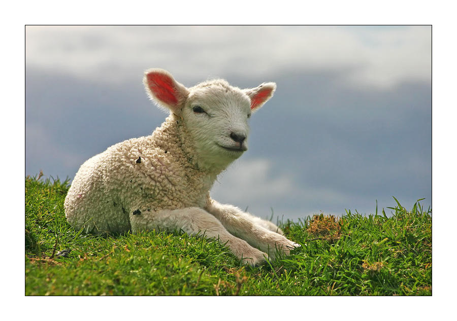 Happy Lamb by light-recycled