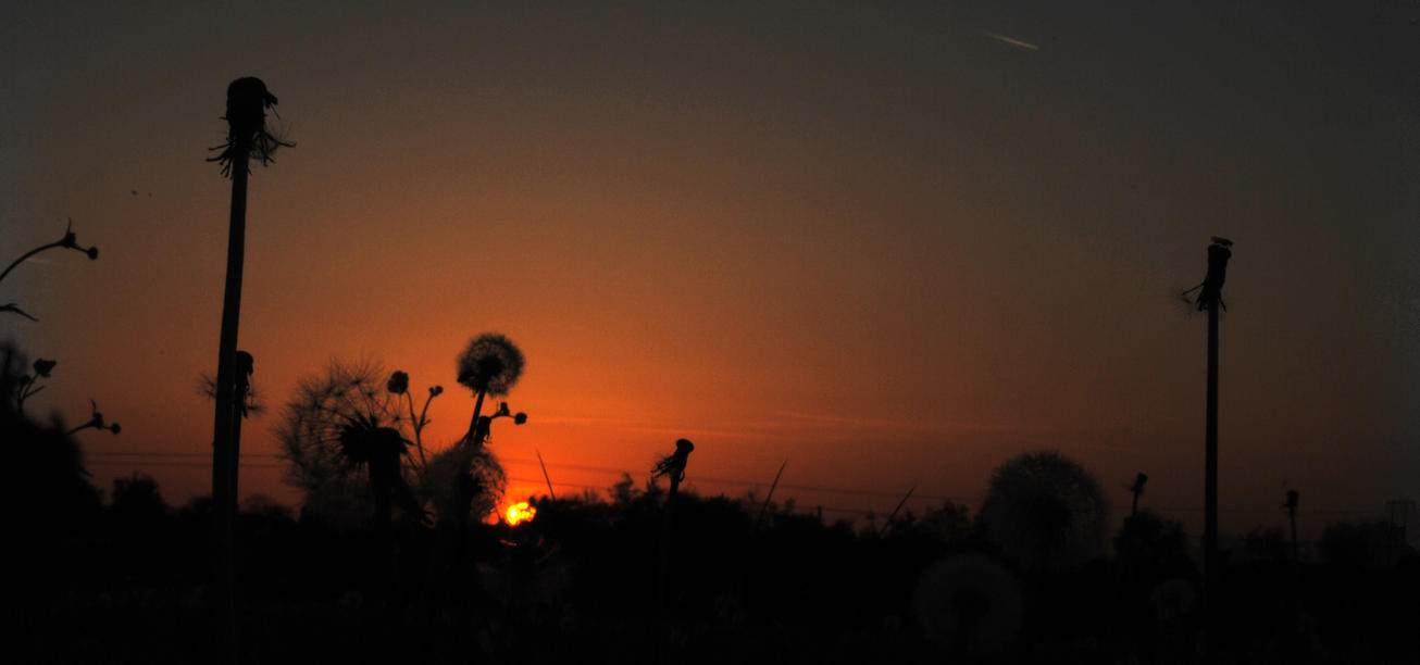 dandelion sunset related keywords - photo #38