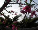 Flower Rampage