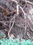Slithering Sticks