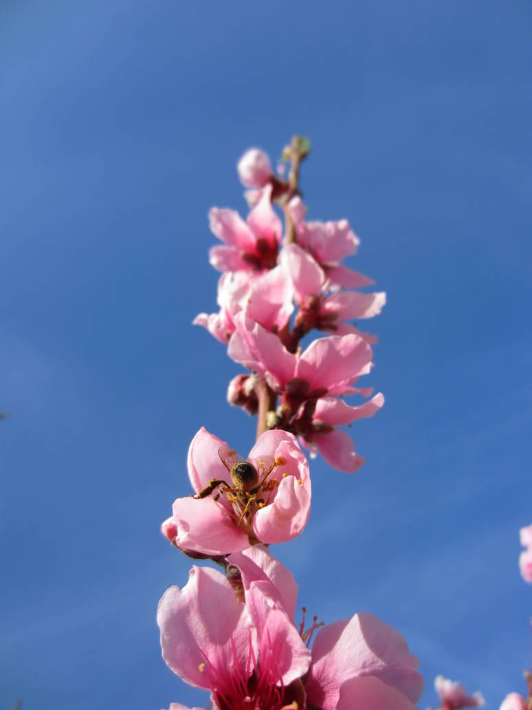 Climbing Blossoms
