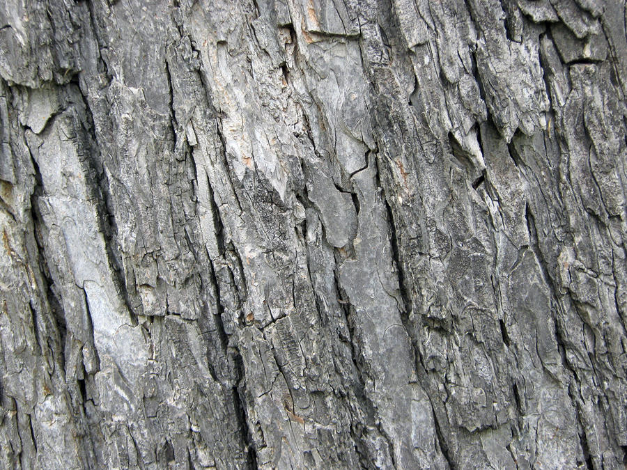 Bark Texture I