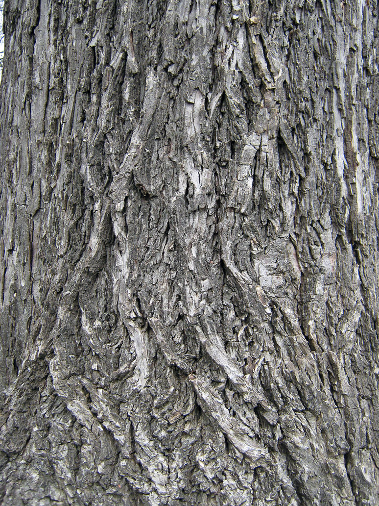 Bark Texture II by Neriah-stock