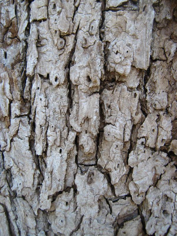 More Bark Texturess