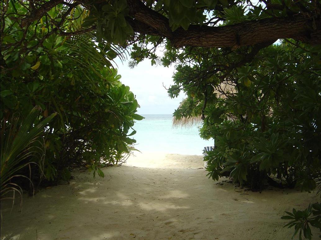hidden paradise by dozibee