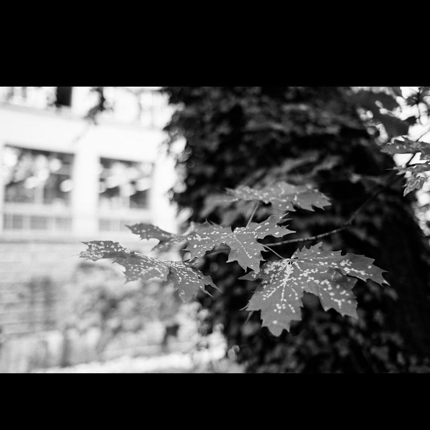 swiss trees by londn