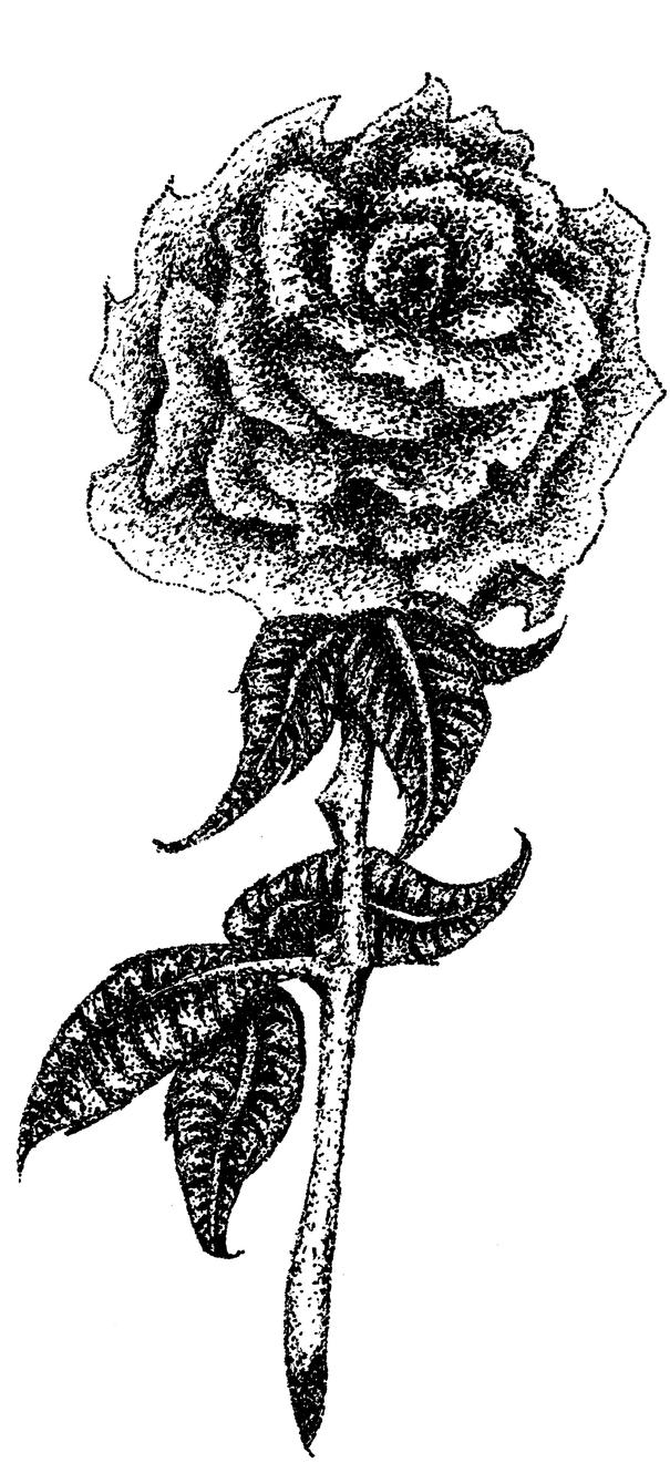 Stippled Rose Practice by Ruler-of-Mars