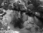 Zen Under the Water