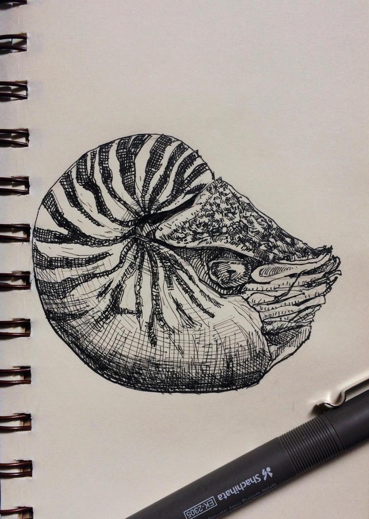 Nautilus  by Disegnophilia