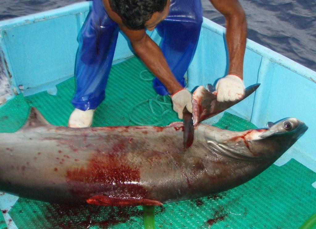 Shark-finning by ggirtc