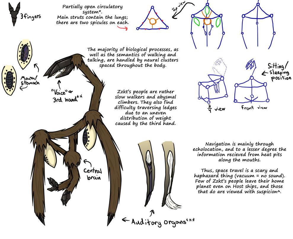 Zzkt Anatomy Reference By Grumpy Old Snake On Deviantart