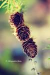 Wooden Rose 2