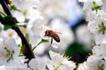 Worker Bee 5