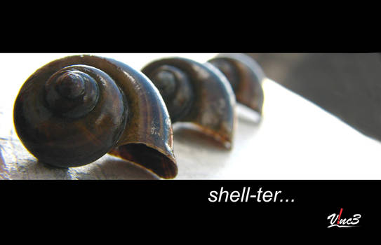 shell_ter