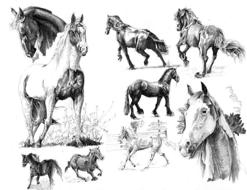 the horses analysis Conclusion the horse are the only ones who have adapted to this difficult dark atmosphere the silence of the horses appreciates the tendency of the animals to adapt.