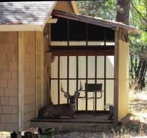 Porch Buck