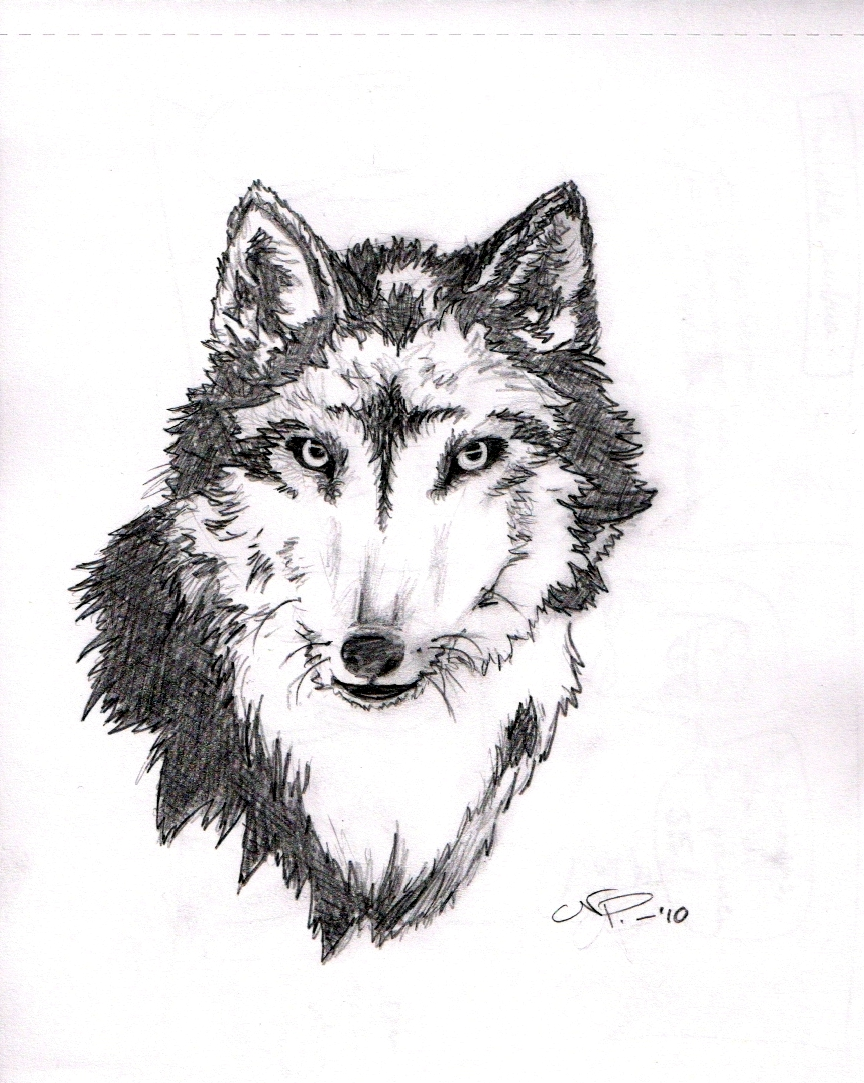 Wolf Tattoo Sketch a Wolf Tattoo Sketch by