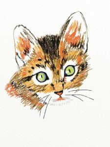 Lcandu's Profile Picture